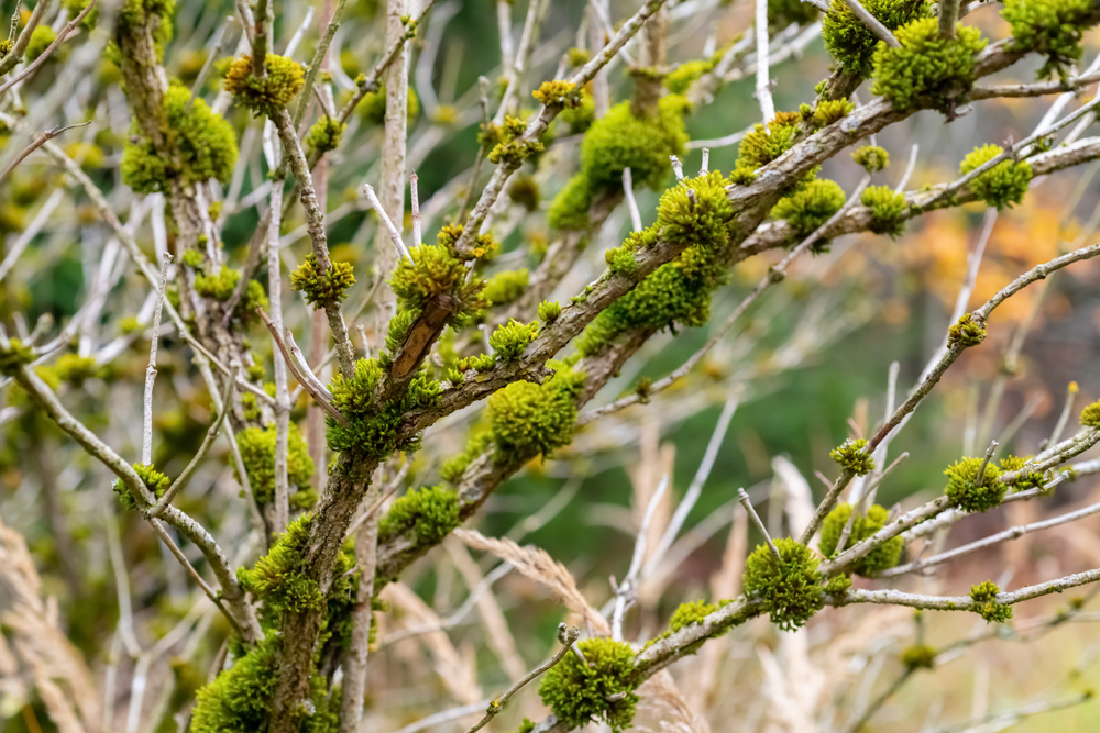 different types of moss