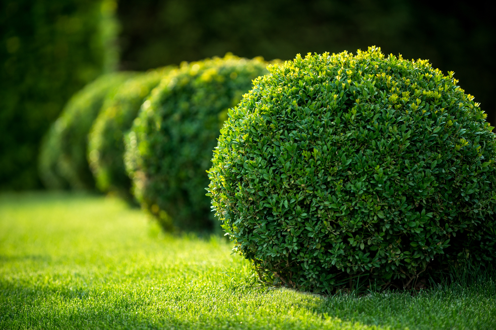 100+ Different Types of Bushes and Shrubs