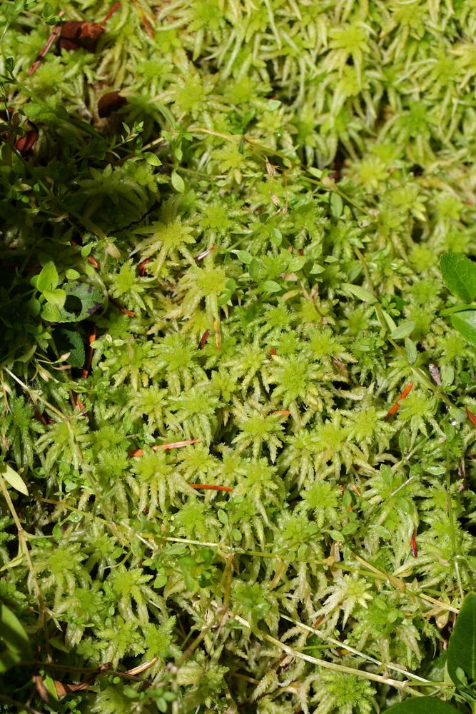 kinds of moss