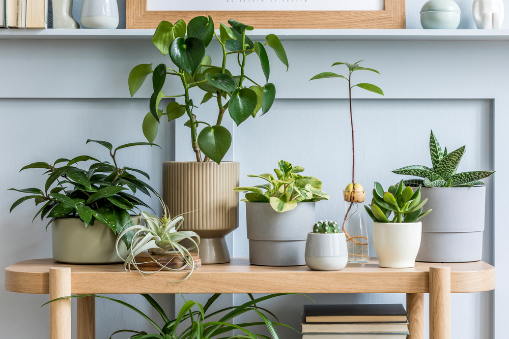 50 Indoor House Plants (Best Indoor Plants for Home)